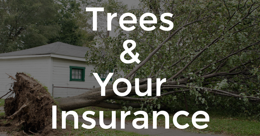 How Does Insurance Work When Trees Fall?