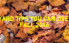 Modern-Tips For Managing Fall Foilage