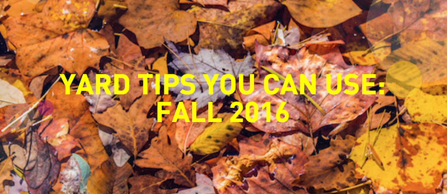 modern-tips-for-managing-fall-foilage