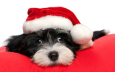 A Guide To Pet Safety During The Holidays